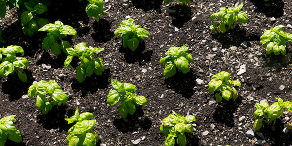 Bio-Garten, die Vorteile und einige Tipps