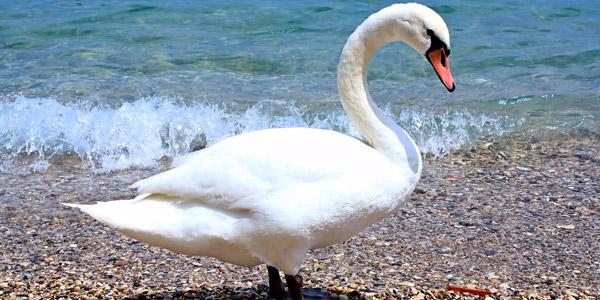 Die Entspannung am Gardasee