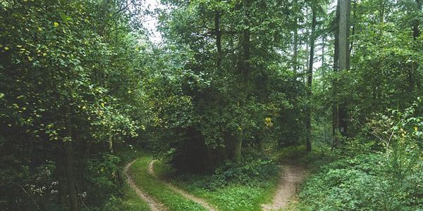 Der Ponaleweg